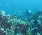 indonesia (1)