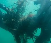 Plastic Ocean (9)