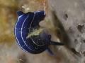 LUCA PUCCI - nudibranco blu2