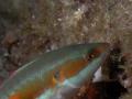 LUCA PUCCI - pesce2