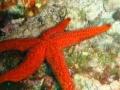 MARCIN - stella marina
