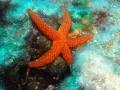 MARCIN - stella marina2